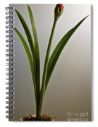 An Emerging Amaryllis Spiral Notebook