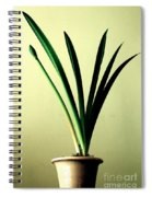 Fanned Leaves Of An Amaryllis Spiral Notebook