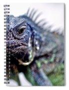 Close Up Beady Eyed Iguana Spiral Notebook