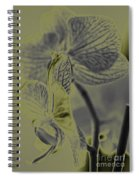 New Photographic Art Print For Sale Orchids 11 Spiral Notebook