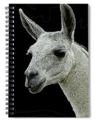 New Photographic Art Print For Sale   Portrait Of  Llama Against Black Spiral Notebook