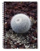 New Photographic Art Print For Sale White Ball Cactus Spiral Notebook