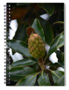 New Start Magnolia Spiral Notebook
