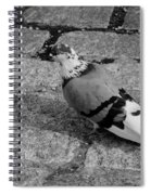 New York City Pigeon In Black And White Spiral Notebook
