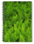 New York Ferns Spiral Notebook