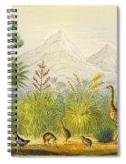 New Zealand Kiwi, Takahe, Extinct Moa Spiral Notebook
