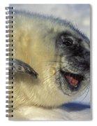 Newborn Gray Seal Pup Halichoerus Spiral Notebook
