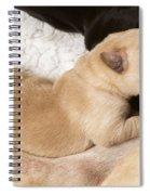 Newborn Labrador Puppy Suckling Spiral Notebook