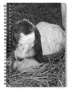 Newborn Spiral Notebook