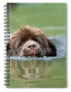 Newfoundland Dog, Swimming In River Spiral Notebook