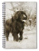 Newfoundland Friend Spiral Notebook