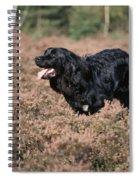 Newfoundland Running Spiral Notebook