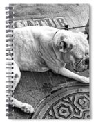 Newsworthy Dog In French Quarter Black And White Spiral Notebook
