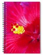 Night Fire Hibiscus Spiral Notebook