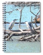 Night Herons Spiral Notebook