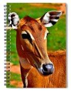 Nilgai Spiral Notebook
