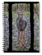 Curious Yearling Deer Spiral Notebook