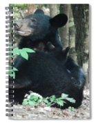 Bear - Cubs - Mother Nursing Spiral Notebook