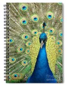 Noble Peacock Spiral Notebook