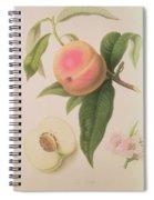 Noblesse Peach Spiral Notebook