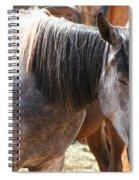 Noon Nap Spiral Notebook