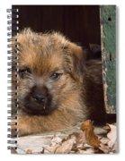 Norfolk Terrier Puppy By Barn Door Spiral Notebook