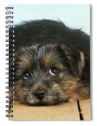 Norfolk Terrier Puppy Spiral Notebook