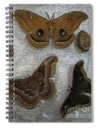 North American Large Moth Collection Spiral Notebook
