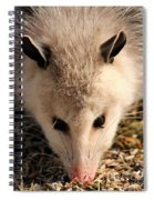 North American Opossum In Winter Spiral Notebook