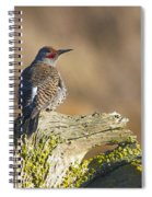 Northern Flicker Spiral Notebook