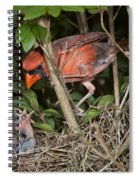 Northern Cardinal At Nest Spiral Notebook