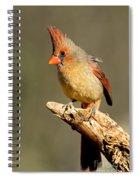 Northern Cardinal Cardinalis Cardinalis Spiral Notebook