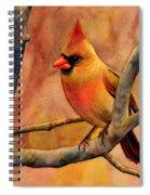 Northern Cardinal II Spiral Notebook