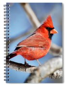 Northern Cardinal Scarlet Blaze Spiral Notebook