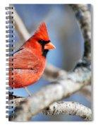 Northern Cardinal Scarlet Blaze Spiral Notebook