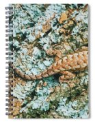Northern Fence Lizard Spiral Notebook