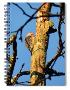 Northern Flicker At Sunrise Spiral Notebook