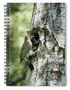 Northern Flicker Nest Spiral Notebook