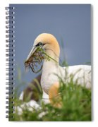Northern Gannet Gathering Nesting Material Spiral Notebook