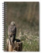Northern Harrier At Rest Spiral Notebook
