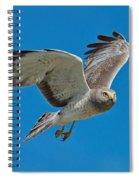 Northern Harrier Male In Flight Spiral Notebook