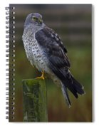 Northern Harrier Spiral Notebook