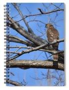 Northern Harrier  Spiral Notebook