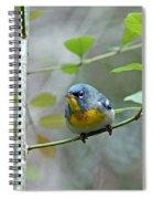 Northern Parula On Branch Spiral Notebook