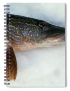 Northern Pike Fish On Snow, Close Spiral Notebook