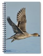 Northern Pintail Hen Spiral Notebook