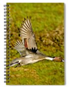 Northern Pintail In Flight Spiral Notebook