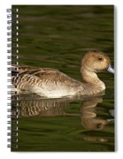 Northern Pintail Molting Spiral Notebook