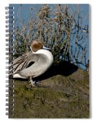 Northern Pintail Pair At Rest Spiral Notebook