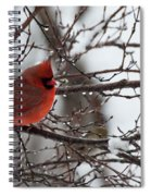 Northern Red Cardinal In Winter Spiral Notebook
